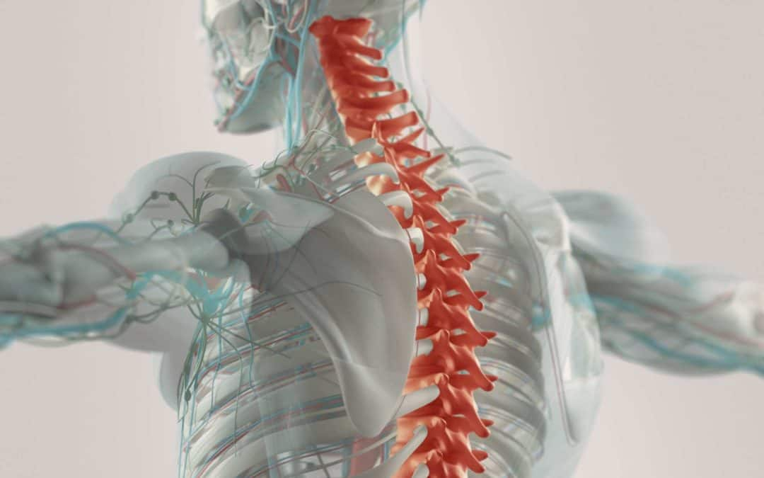 Back Your Inner Athlete – Spinal Health